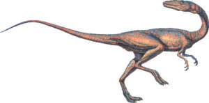 Coelophysis Dinosaur on two legs, with a very long tail, walking to the right on a plain white background.