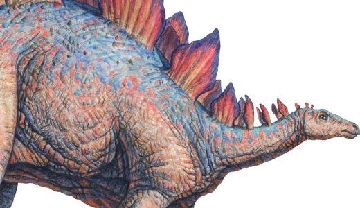 Stegosaurus Dinosaur walking to the right, with wonderful plates along its back.