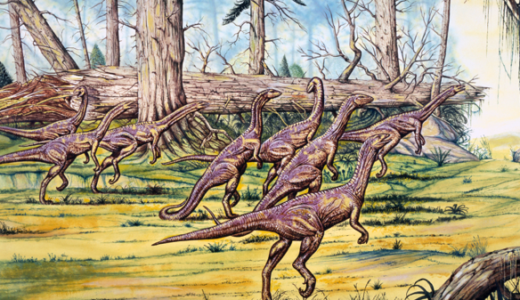 A group of Coelophysis roaming on two legs through woodland.