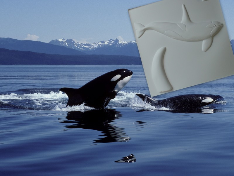 Orca tactile picture from Living Paintings Explore the Seashore