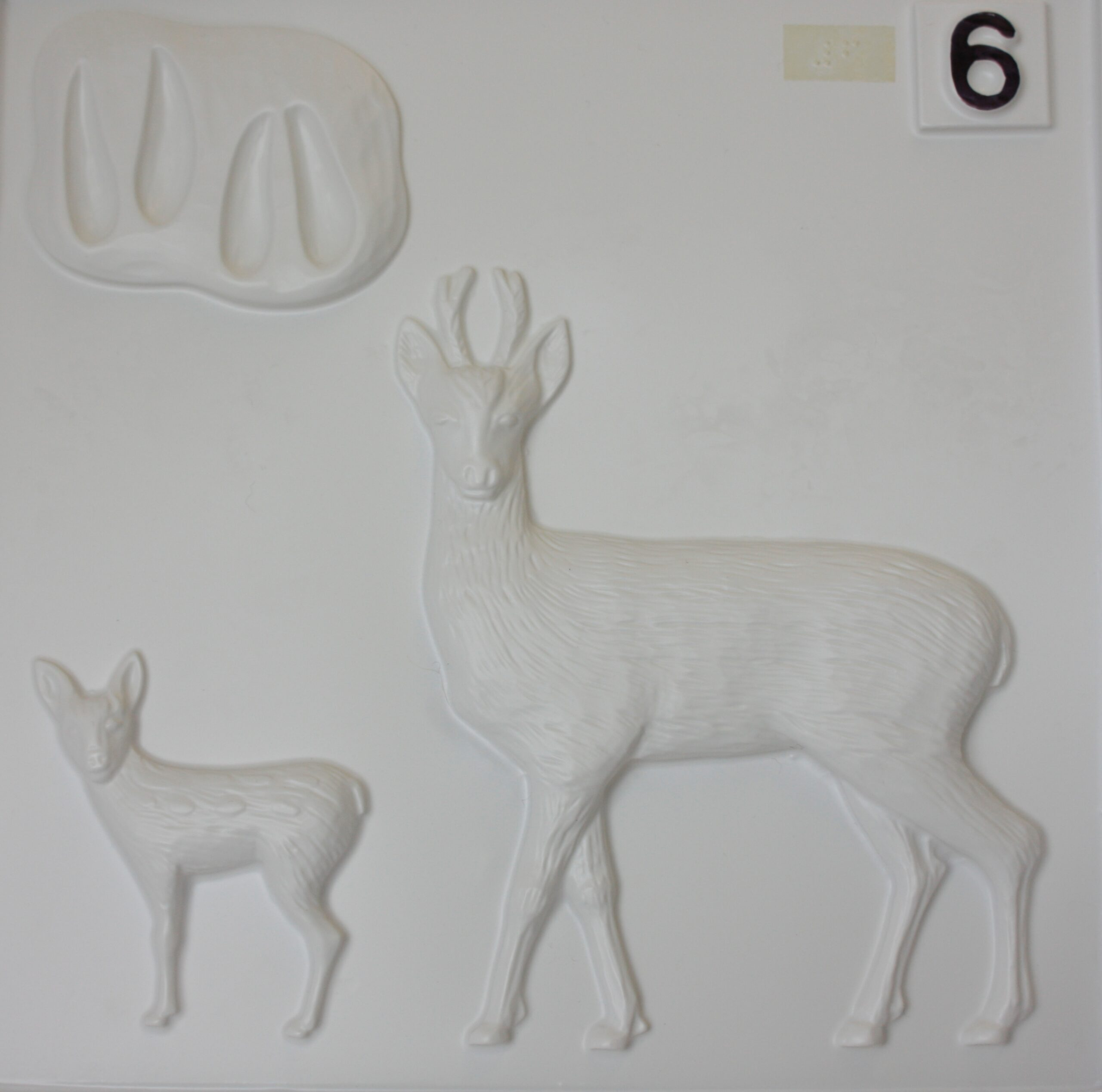 Roe deer tactile image from Living Paintings British Wildlife