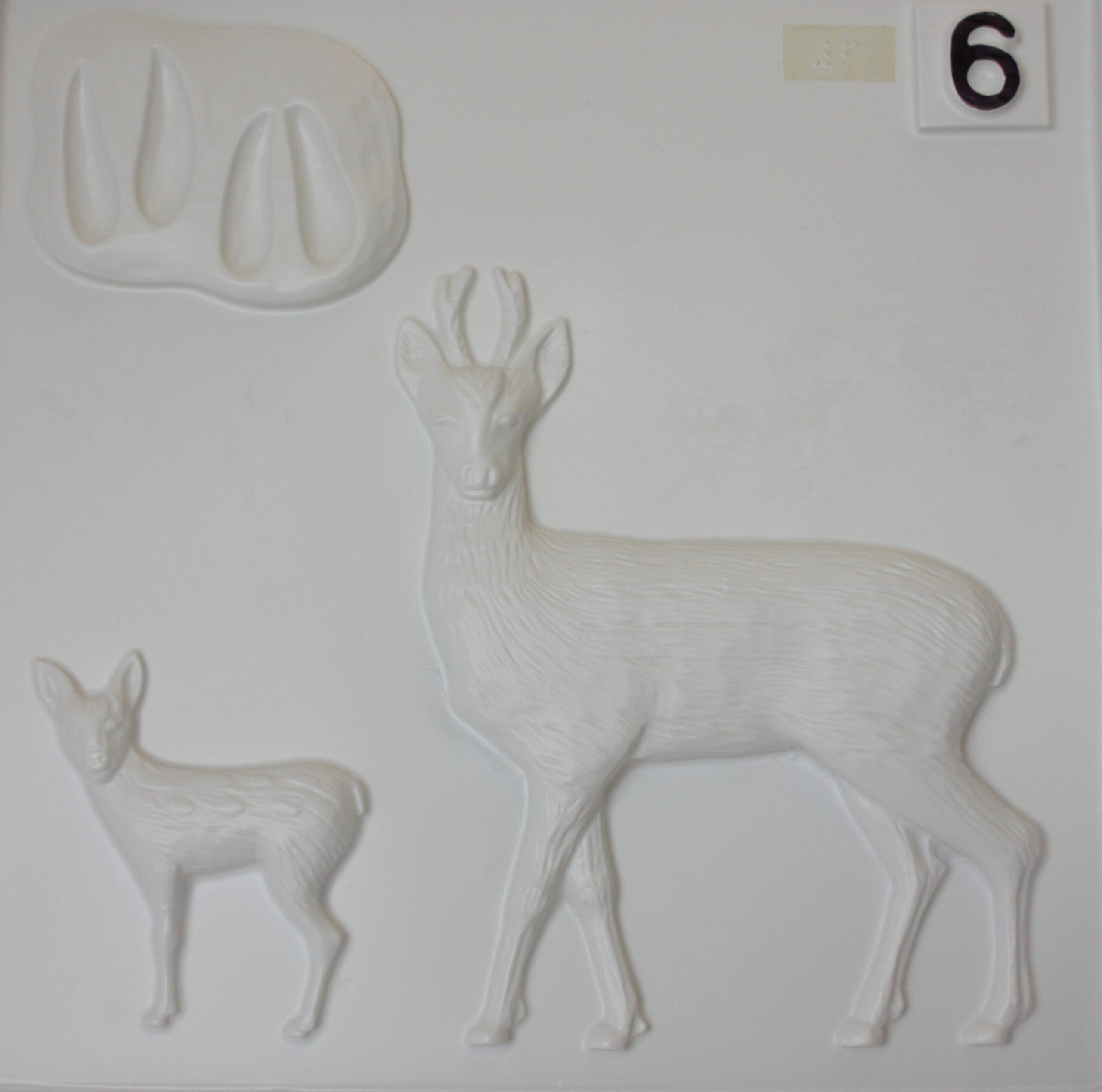 Roe deer tactile image from Living Paintings British Wildlife