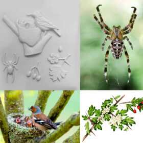 A collage of Nature Detective tactile images including a chaffinch and nest, hawthorn bush.