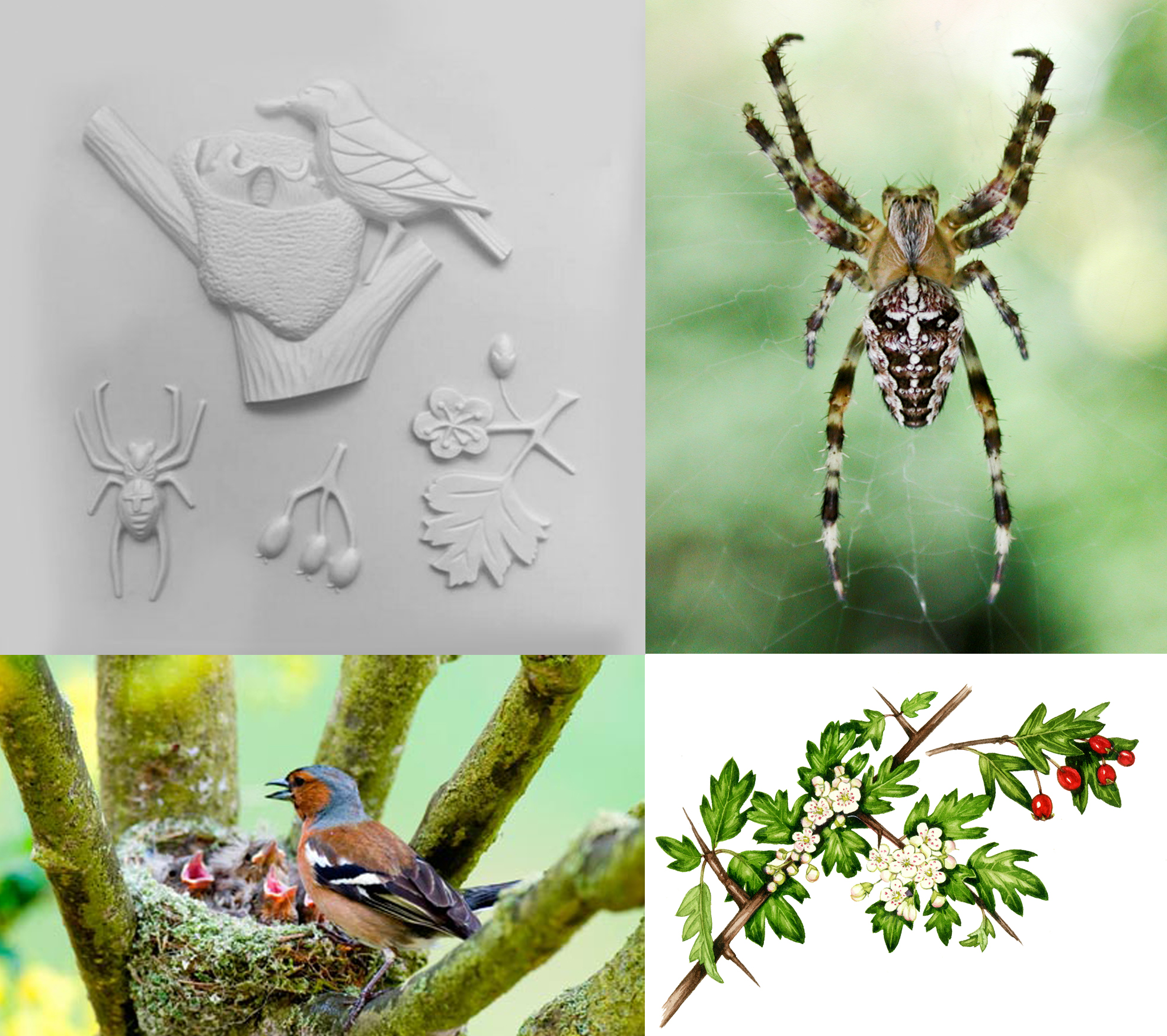 A collage of Nature Detective tactile images
