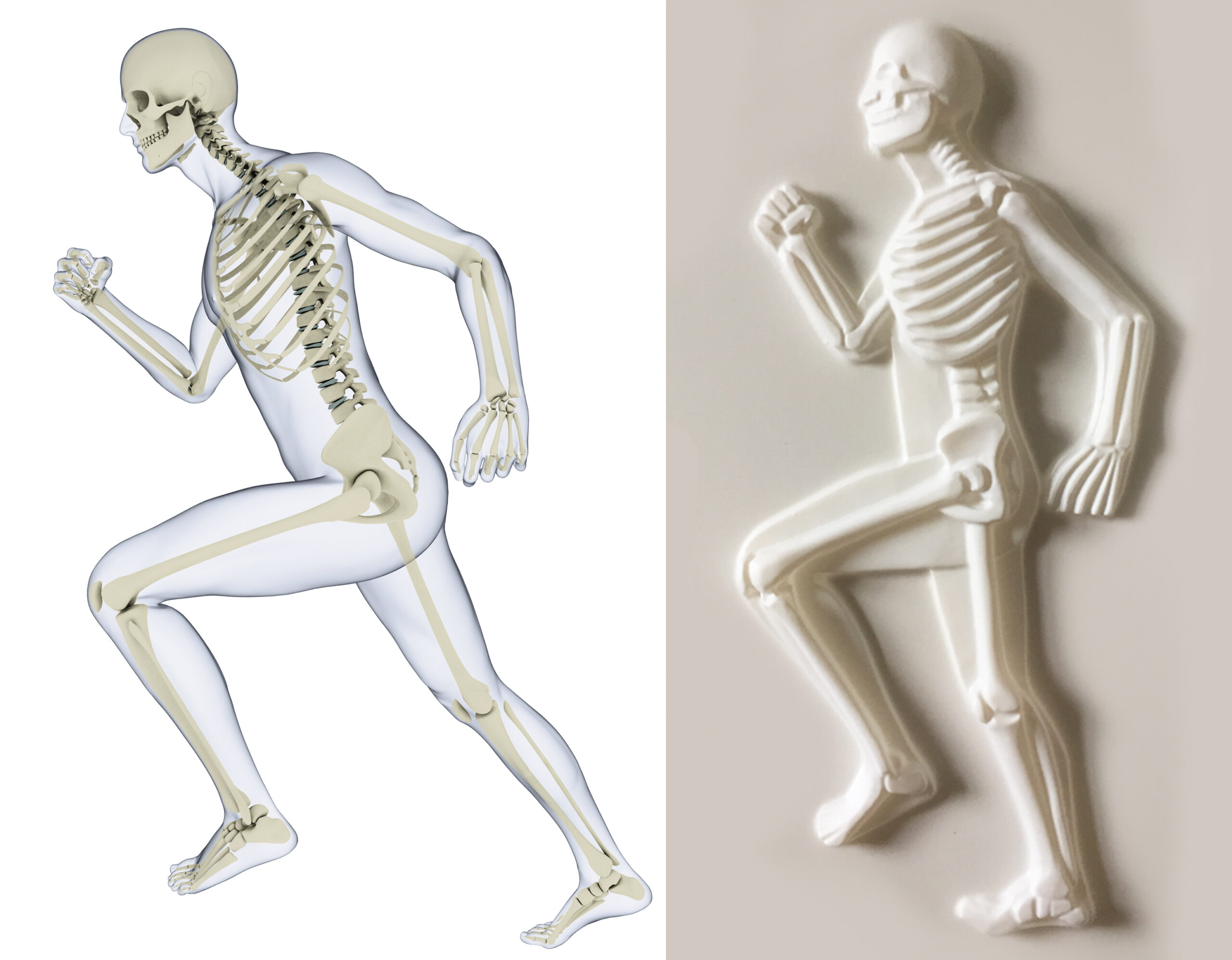 Skeleton tactile from The Body Owner's Guidebook, running to the left, plus it's corresponding illustration.