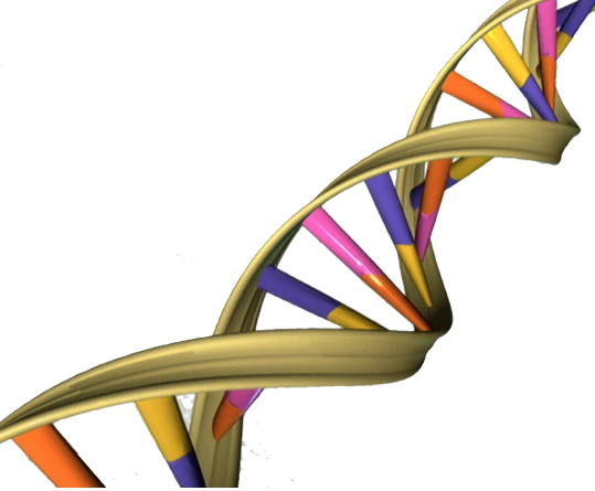 DNA helix computer generated image, showing linking lines in a twirling pattern.