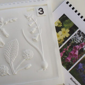 British Wildflowers pack shot with tactile image of flowers and a colour image pack