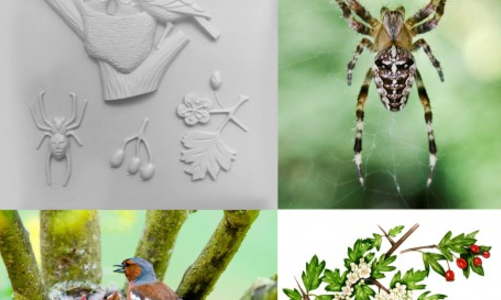 Forest School: Nature Detectives images and tactiles.