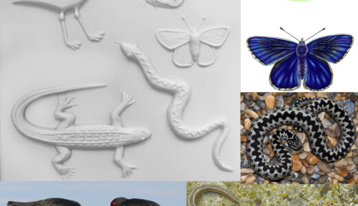 Snake and lizard images & tactiles.