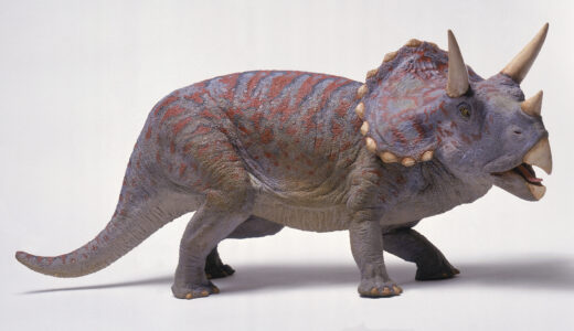 Triceratops with mouth open.