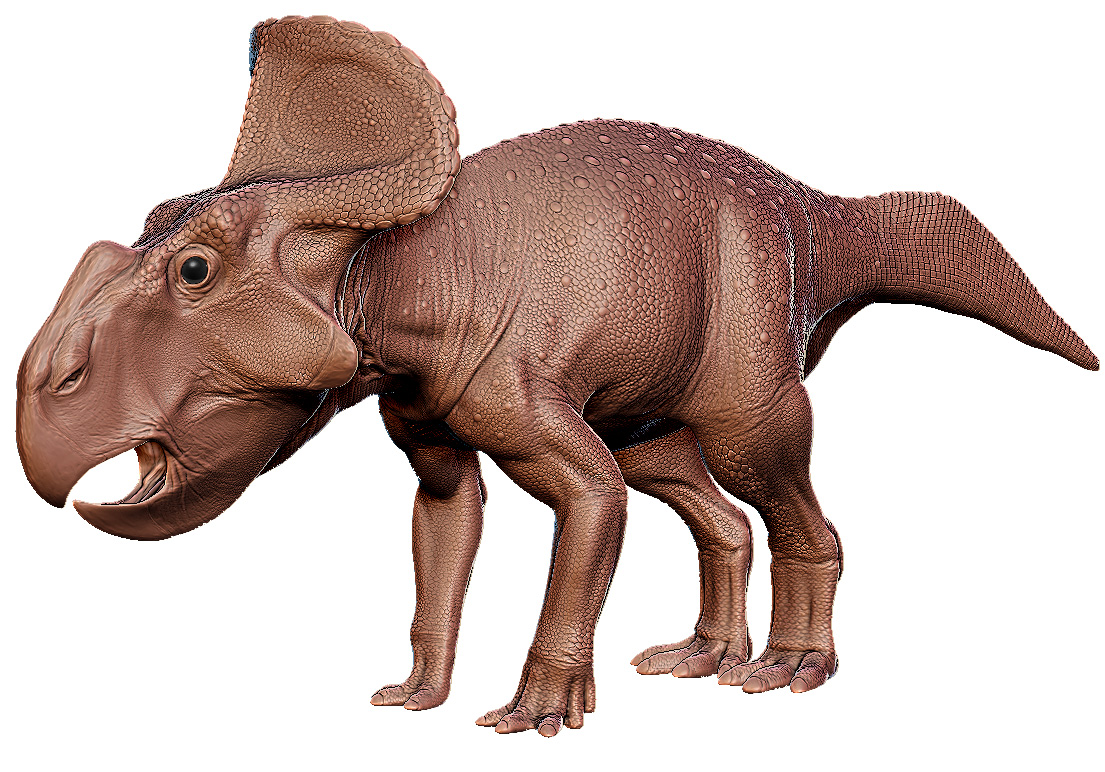 Protoceratops, a large headed four legged dinosaur with a beak like mouth.