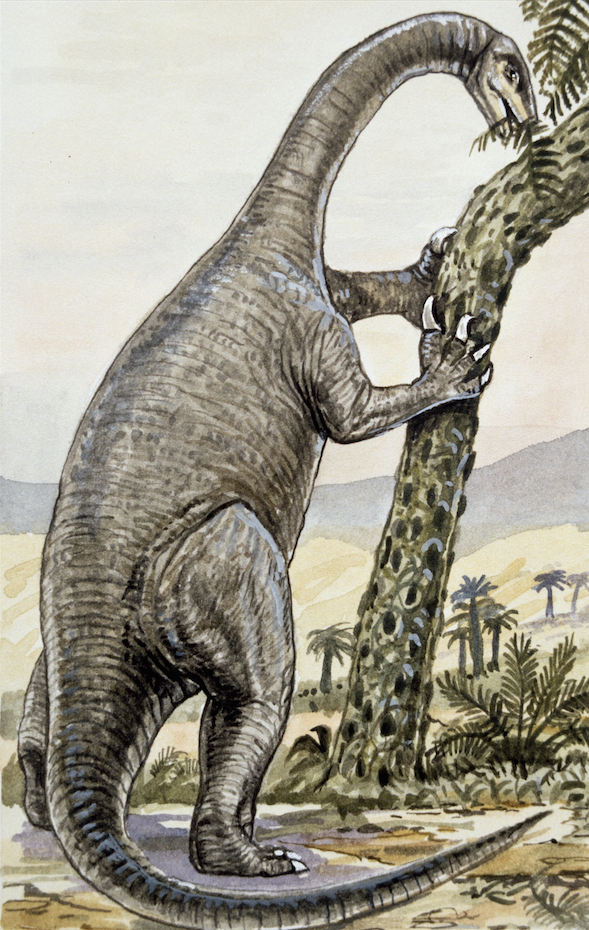 Plateosaurus feeding on tow legs, reaching its long neck high up in a tree.