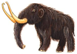 Illusration of a Woolly Mammoth.