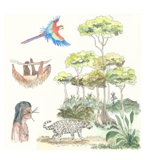 Illustration of a rainforest region showing trees, native American, Sloth, Jaguar and Parrot, that are foound in the different layers of the biome.