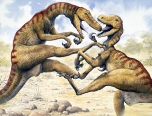 Two Utahraptors fighting in a desert.